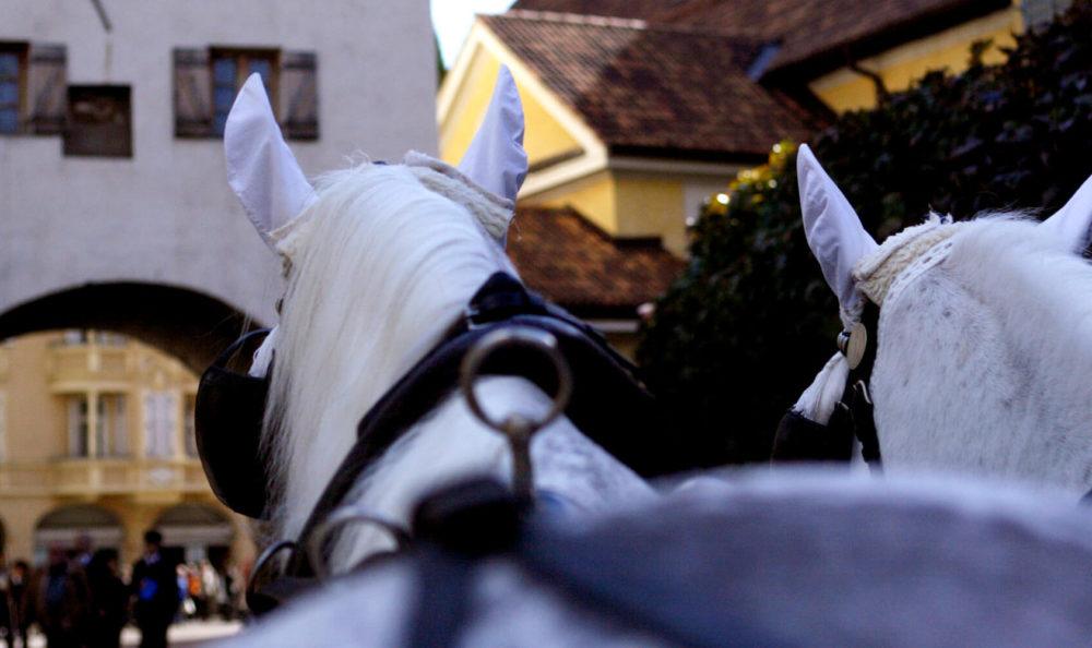 Horse drawn carriage ride through the center of  Merano
