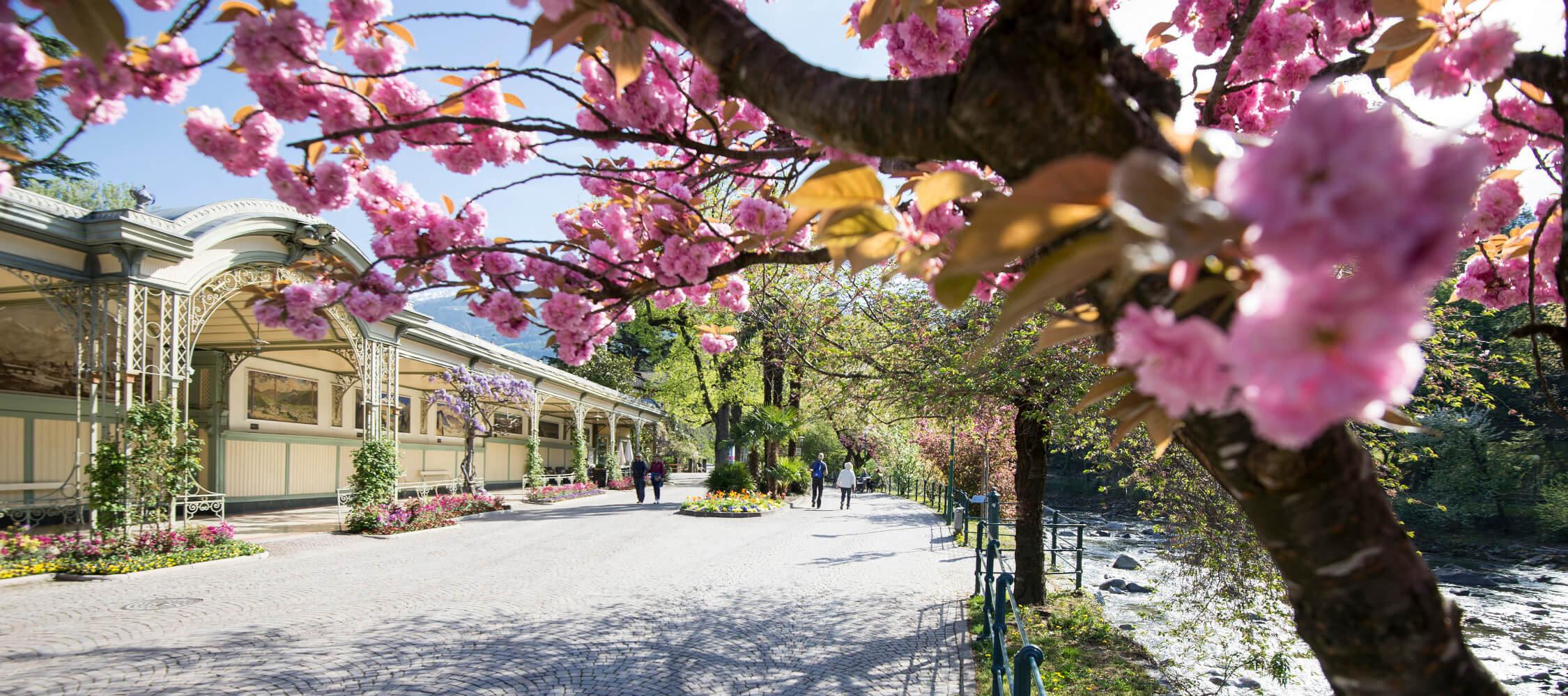 Italien-Trentino_Suedtirol_Alto_Adige_Merano_Meran_Besichtigen_Natur_Promenade_Wandelhalle_Spazieren_Fruehling_Spring_Kurverwaltung-Alex-Filz_mgm01138kume