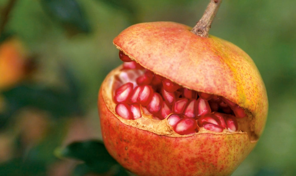 Plants to sink your teeth into