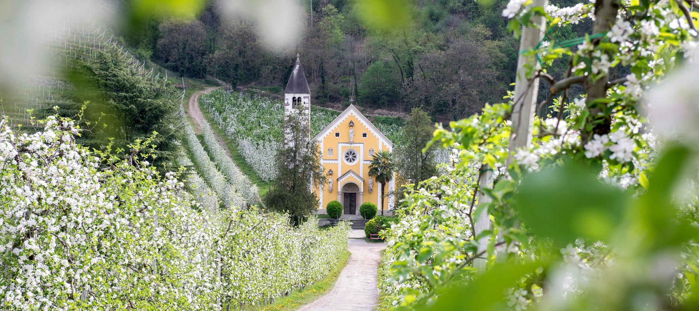 Italien-Trentino_Suedtirol_Alto_Adige_Merano_Meran_Natur_Fruehling_Apfelbluete_Kurverwaltung-Meran-Alex-Filz_mgm01158kume_2250x1000