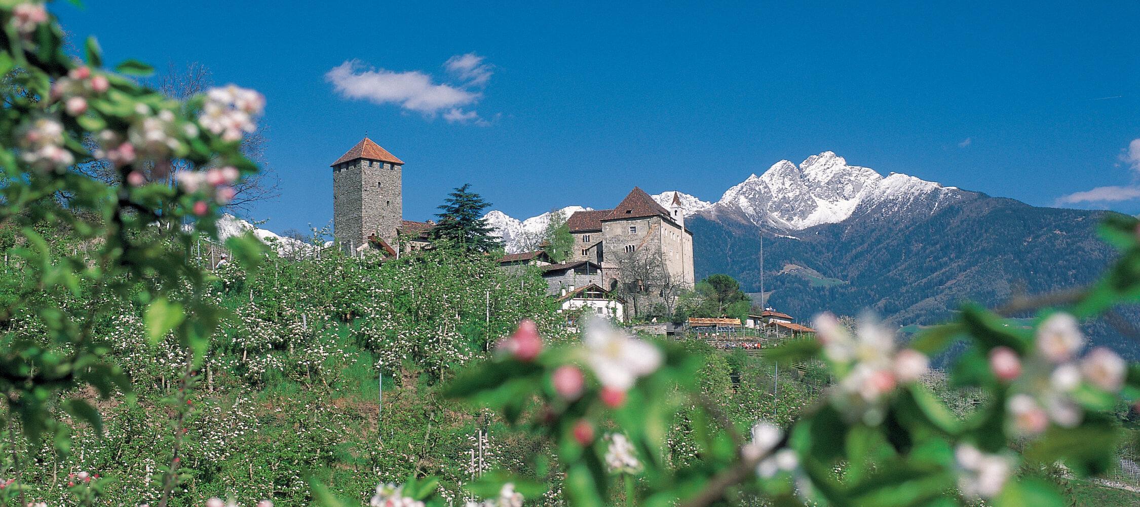 Italien-Trentino_Suedtirol_Alto_Adige_Merano_Meran_Natur_Fruehling_Apfelbluete_Schloss_Tirol_IDM-Helmuth-Rier_smg00835heri_2250x1000