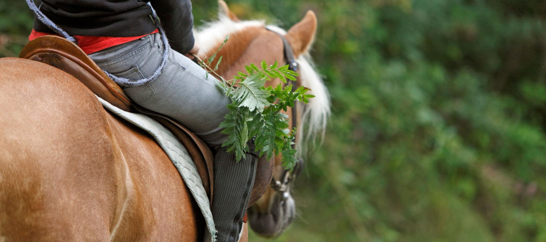 Italien-Trentino_Suedtirol_Alto_Adige_Merano_Meran_Natur_Sport_Reiten_Pferd_MGM-Frieder-Blickle_mgm00484frbl_2250x1000