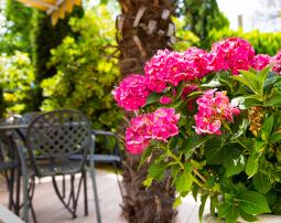Hotel-Villa-Laurus-Merano-Garten-Terrasse-Detail-Anguane-6821-255x202